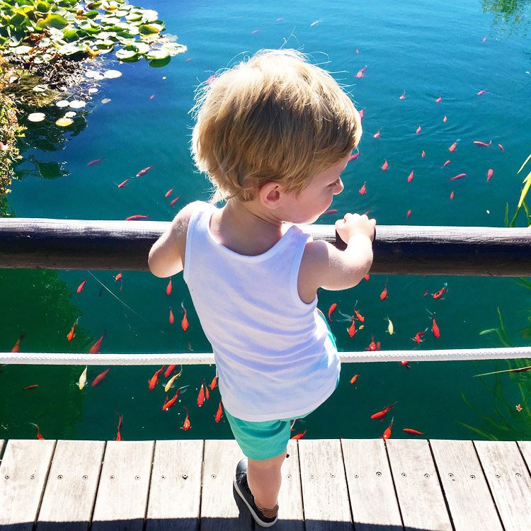 A kid observing the tropical fish at Asia Gardens Hotel & Thai Spa