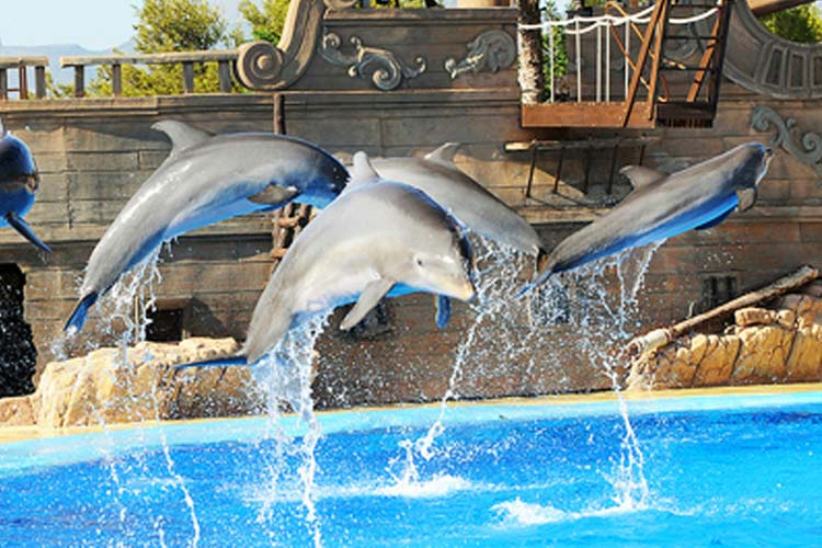 Asia Gardens - dolphins spectacle
