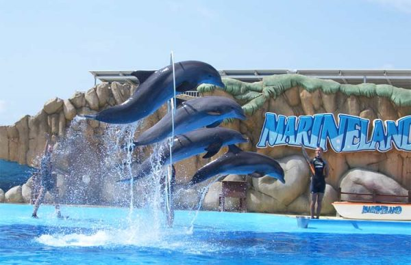 Marineland with dolphins at Castillo Hotel Son Vida