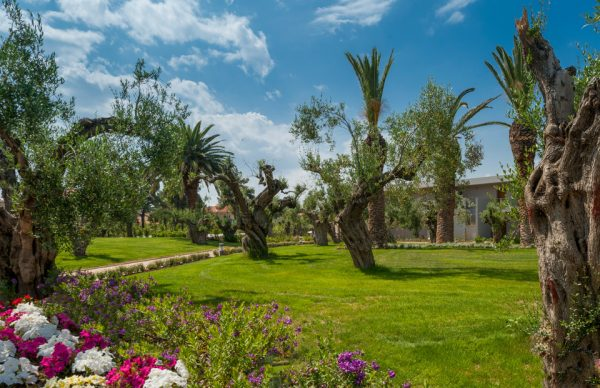 Colorful flowers and trees in the gardens of Ikos Olivia