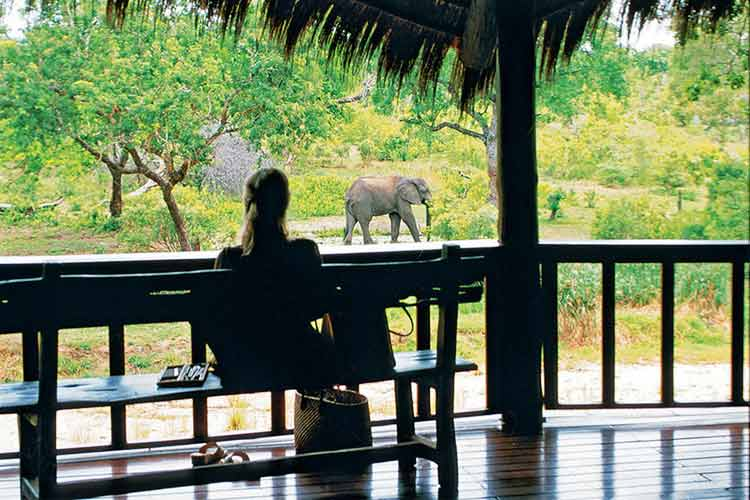 Ulusaba Private Game Reserve watching elephants