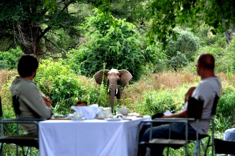 Singita Lebombo Lodge Elephant