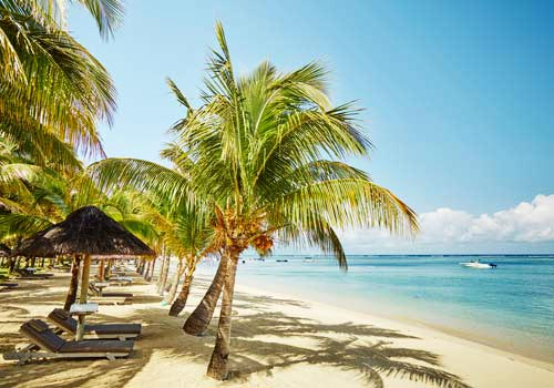 Lux-Le-Morne-Beach with palmtree