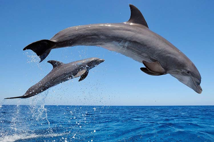 Lux Le Morne Mauritius-dolphins