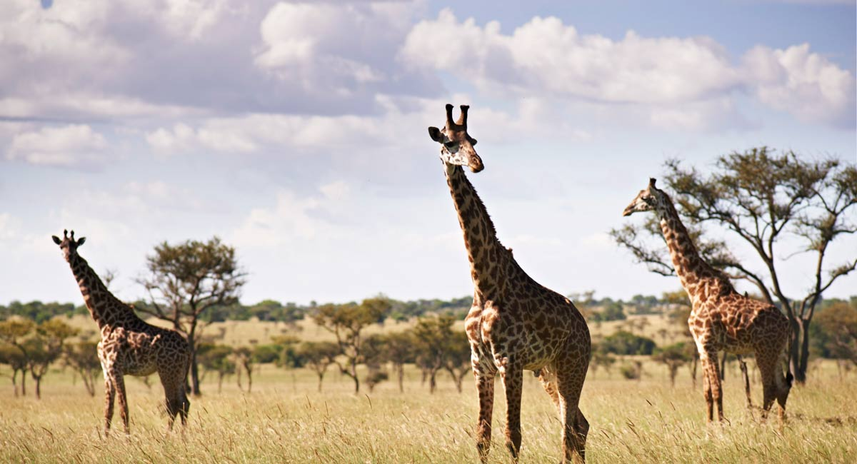 Singita Serengeti House *****