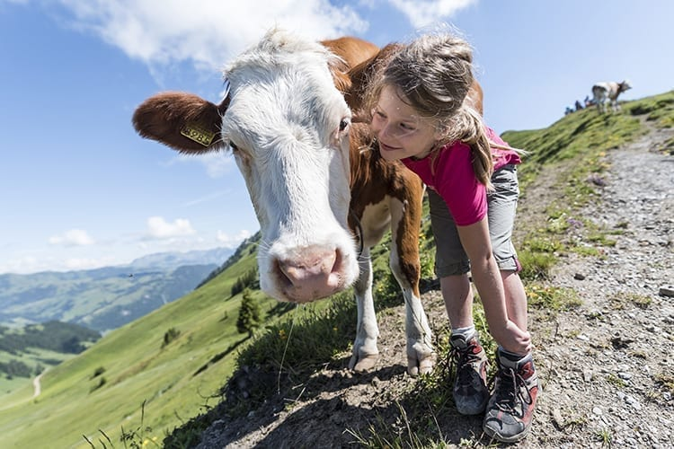 A little girl posing with a cow