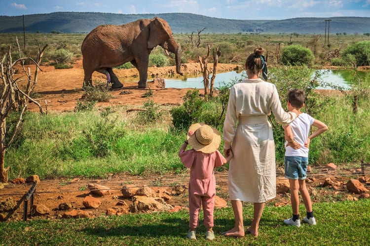 A mother and her two kids watch elephants