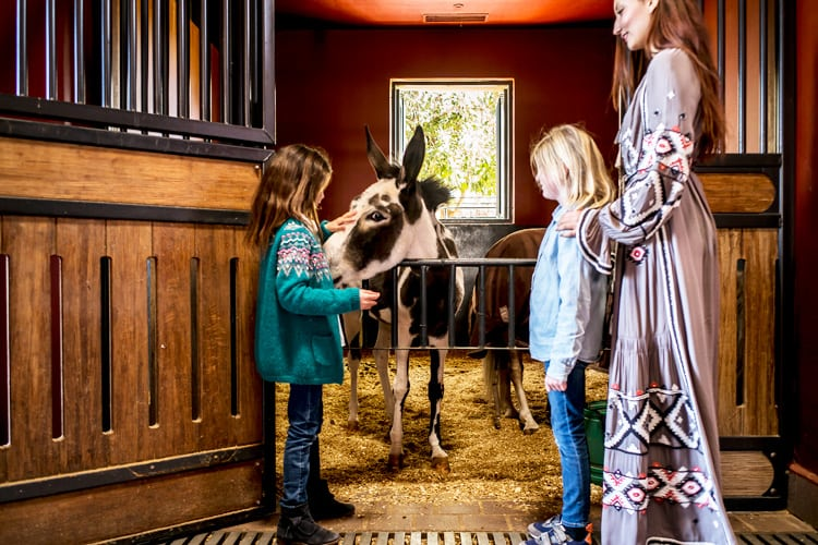 Hotel Selman Marrakech Family learning about horses