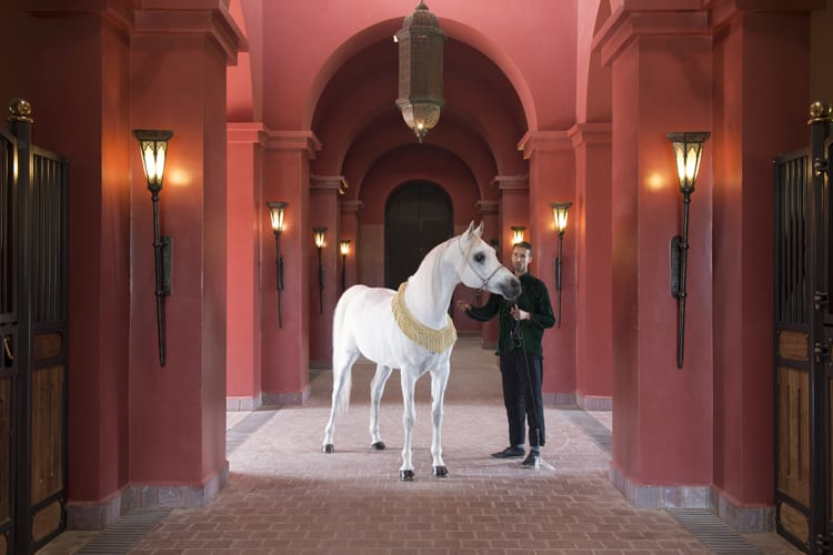 Selman Marrakech Little Guest White horse