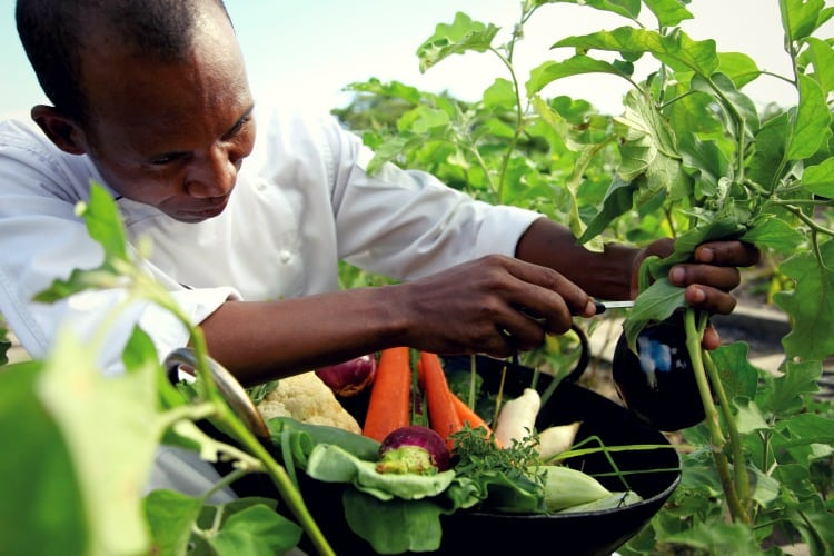 Shanti Mauritius Man picking up fresh vegetables in the garden of the hotel