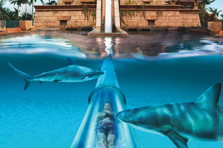 Tobogan with sharks at Atlantis Dubai