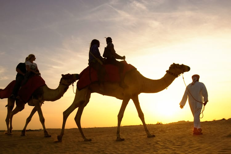 camel in the desert of dubai One & Only Royal Mirage