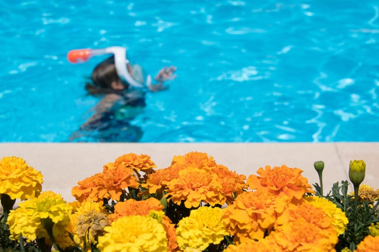 Little Guest Hotels Collection Sport Hotel Hermitage Flower Swimming Pool