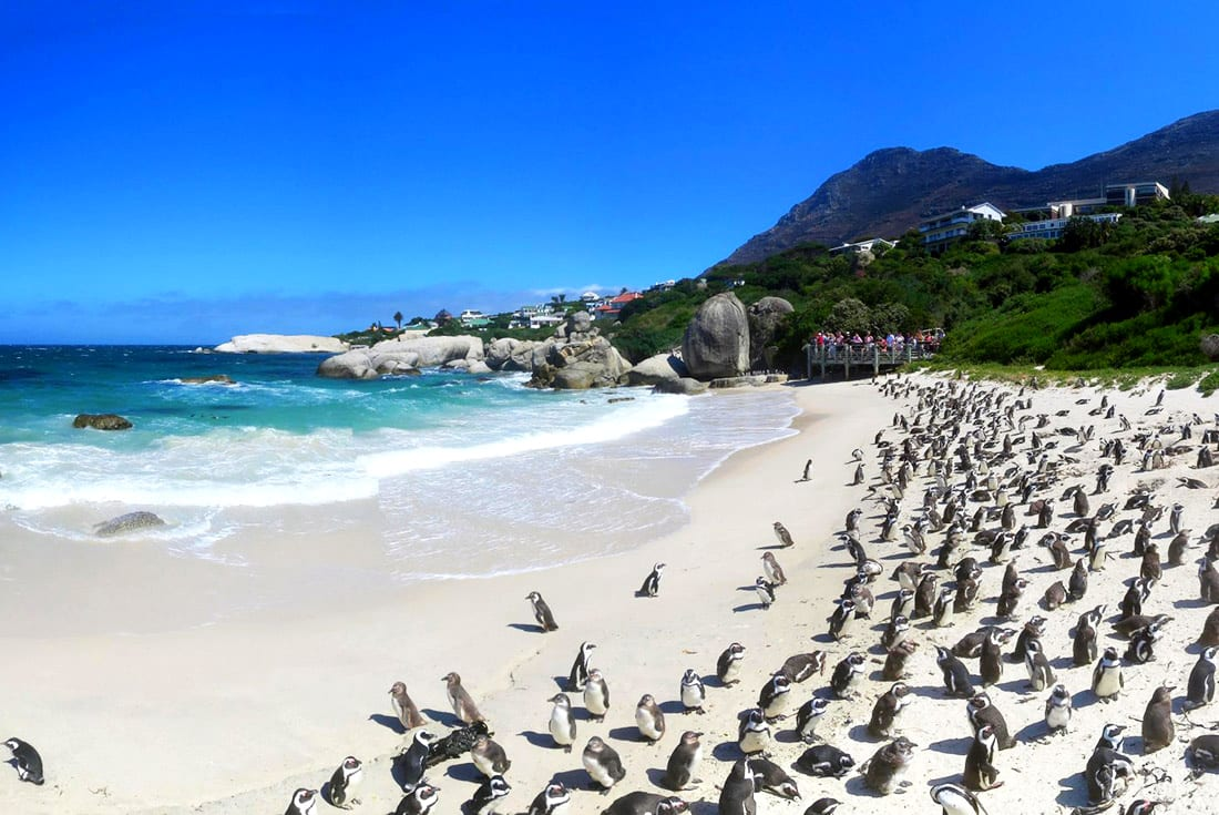 Penguins on a beach during Circuit Safari