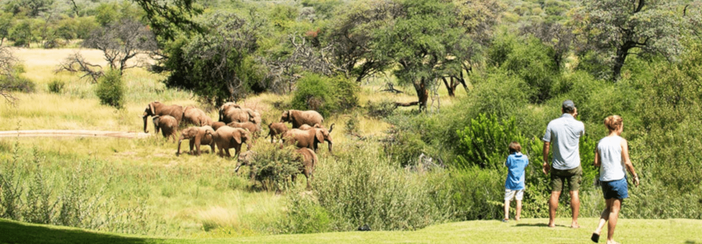 Kids watch with their dad elephants in the savane