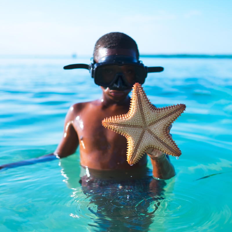 Little Guest Hotels Collection Boy Sea Star Diving