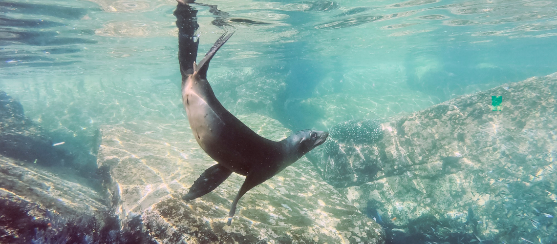Little Guest Hotels Collection Sea Lion