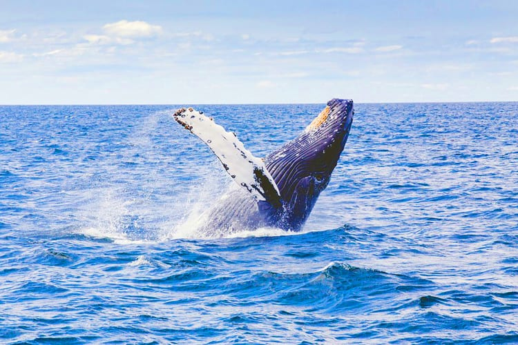 Whale in South Africa