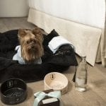 Little Guest Hotels Collection ME Ibiza Pet friendly