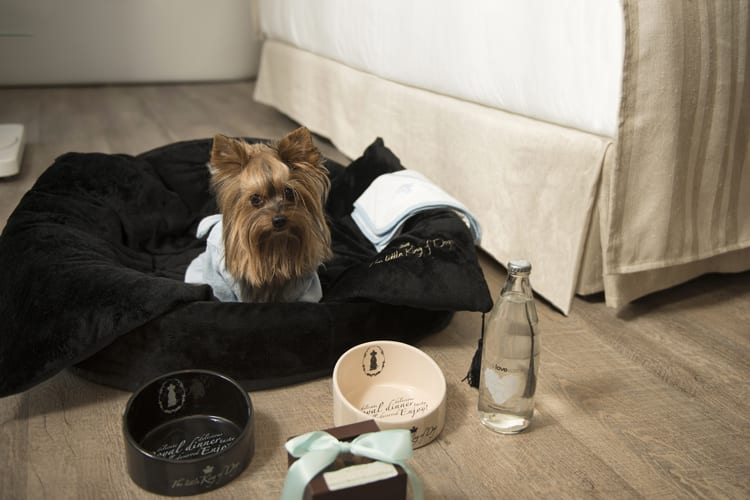 Little Guest Hotels Collection ME Ibiza Lovely Dog Pet Service