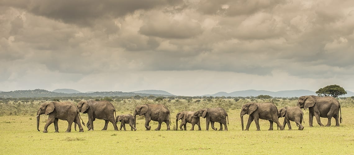 Vaccines Travel Tanzania Elephants