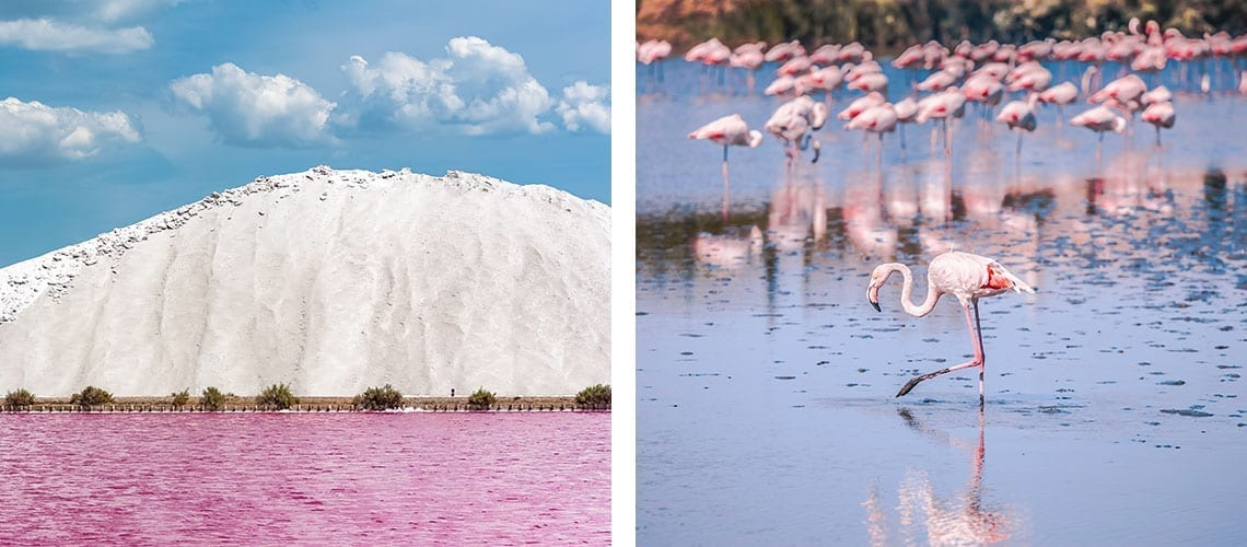 pink water and flamingo