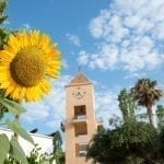 Sunflower and tower at Candia Park Village