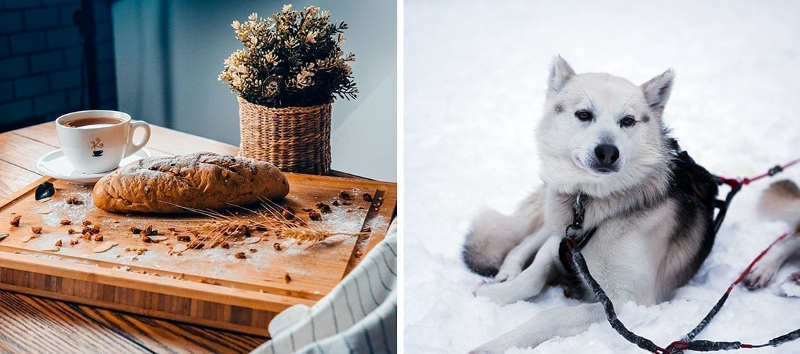 Lapland with family fika moments and sled dogs