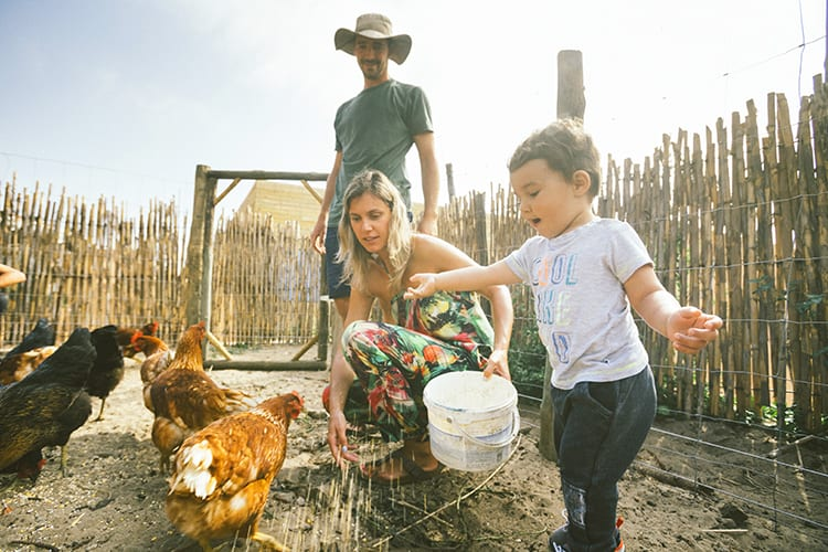 A baby feeding the chickens at Noah Surf House